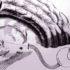 خطأ ديكارت: العاطفة والعقل والدماغ البشري – انتونيو داماسيو / ترجمة: أحمد الغفيلي