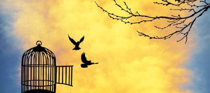 مشكلة الحرية السياسية – زكريا إبراهيم