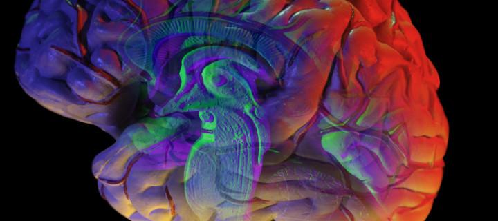 أين تقع الذكريات في دماغك؟ بحث جديد يكشف السر / ترجمة: ميسون الصقعوب