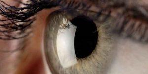 العين بين فلسفة الخلق ونظرية التطور – فاطمة الشملان