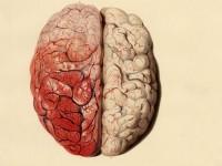البحث عن ماهية الذكاء – كارل زيمر