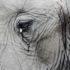 عقول الحيوانات: هل الحيوانات تفكر؟ / ترجمة: ابراهيم جابر ابوساق