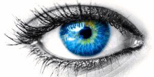 تطور العين – T.D.لامب