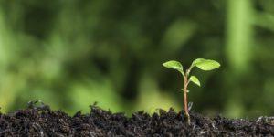 سياسات الأزمة البيئية العالمية: نحو محاولة فهم من منظورات متباينة مقارنة – ماهيتاب منتصر
