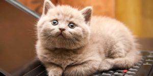 سؤال أخلاقي: هل يجب أن نتوقف عن تربية الحيوانات الأليفة؟ – ليندا ماكروبي / ترجمة: فاطمة بنت ناصر