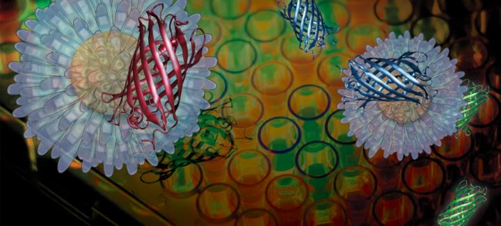 الانطباعات الغائية في علم الأحياء - موسوعة ستانفورد للفلسفة / ترجمة: سارة اللحيدان