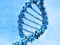 لماذا یُسْتبعدُ وجودُ اختلافاتٍ جینیَّةٍ في الذكاء بین الأجناس؟