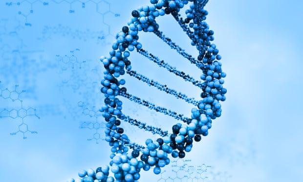 لماذا یُسْتبعدُ وجودُ اختلافات جینیة في الذكاءفي الذكاء بین الأجناس؟ رسم توضیحي لشریط الحمض النووي DNA