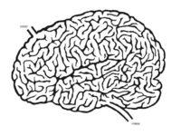 كيف لـ الجينات تشكيل عقولنا؟ الأمر معقد! – كيفين ميتشل / ترجمة: همام المرتضي