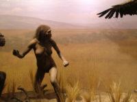 من نهاية التاريخ إلى المنعرج الحيوي، مكانة التاريخ الطبيعي في استكشاف كينونة الإنسان –  محمد عبدالنور