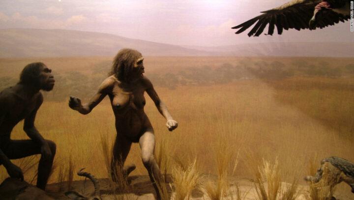 من نهاية التاريخ إلى المنعرج الحيوي، مكانة التاريخ الطبيعي في استكشاف كينونة الإنسان - محمد عبدالنور