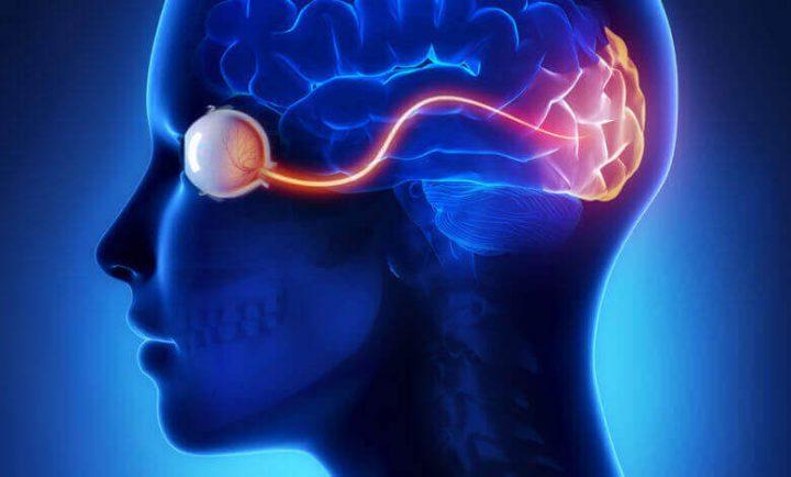 الدماغ البصري علم