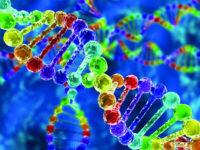 شرح العرق و علم الوراثة والعلم الزائف – إيوان بيرني، جنيفر راف، آدم راذرفورد، إيلوين سكالي / ترجمة: رزان التركي