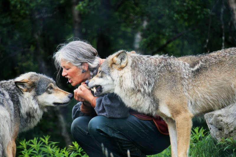 علم السلوك الحيواني سابولسكي