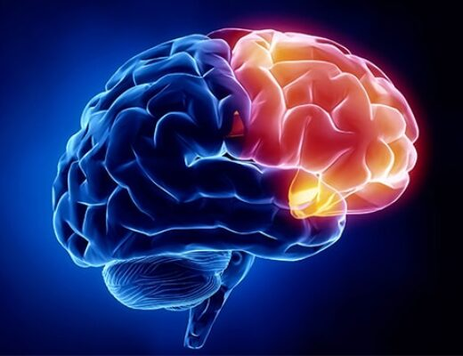 مقدمة لعلم الأعصاب (2) –  باتريك هاوس، دانا تُكر