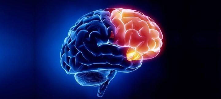 علم الاعصاب نيولوجي